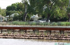 18. Footbridge for wetlands.  Oaklands Park, SA.
